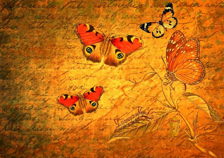 transformation script butterflies