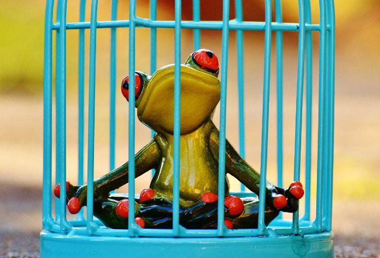 frog prison