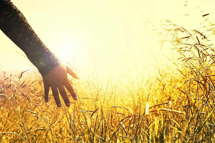 sunshine grass hand