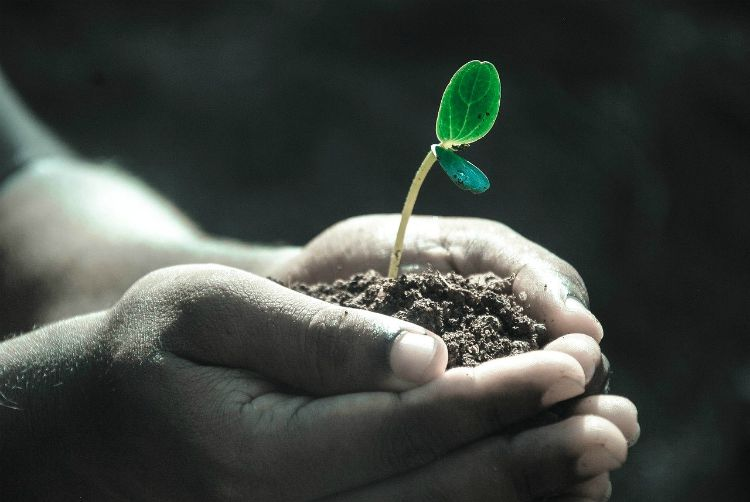 hands seedling