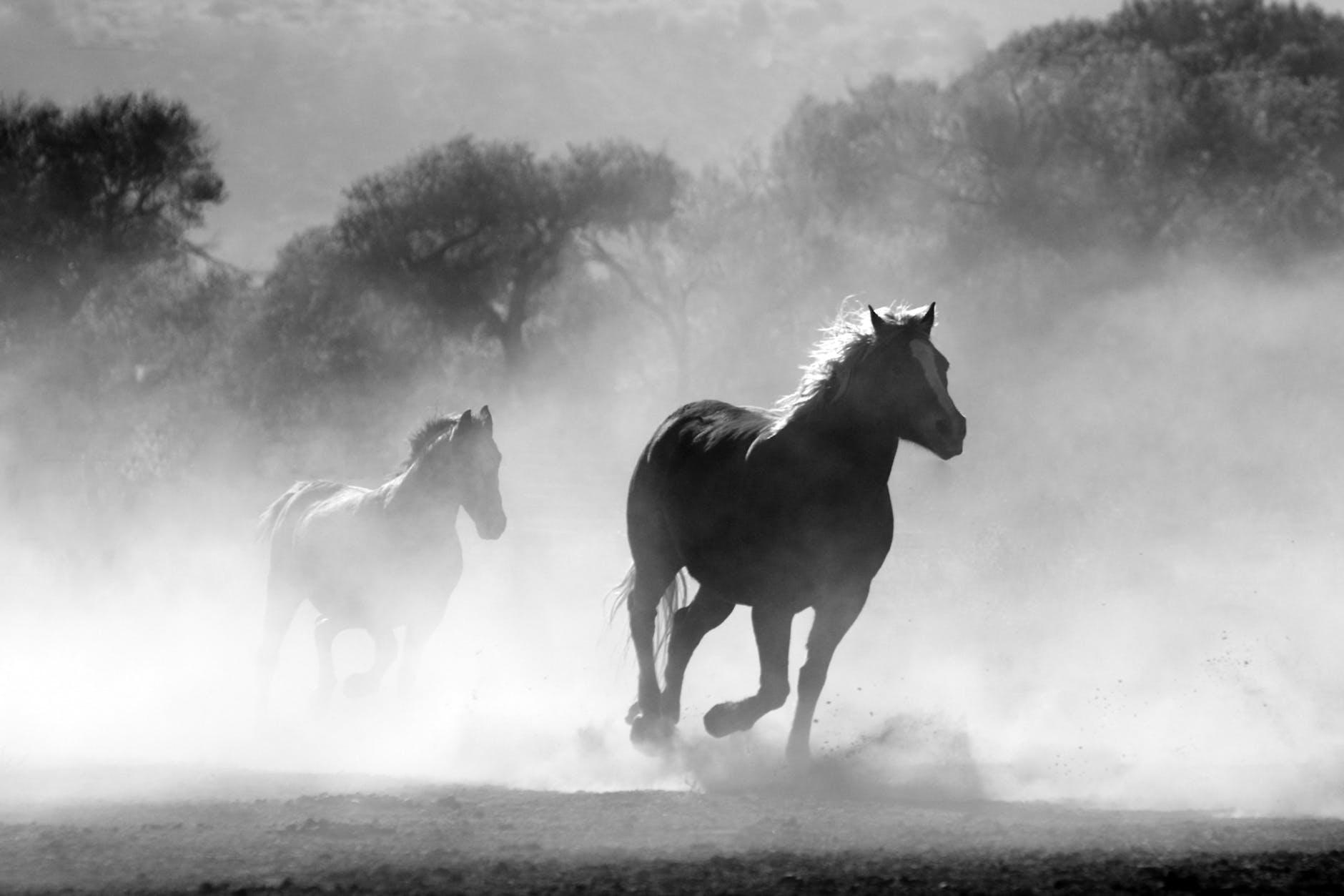 horses freedom